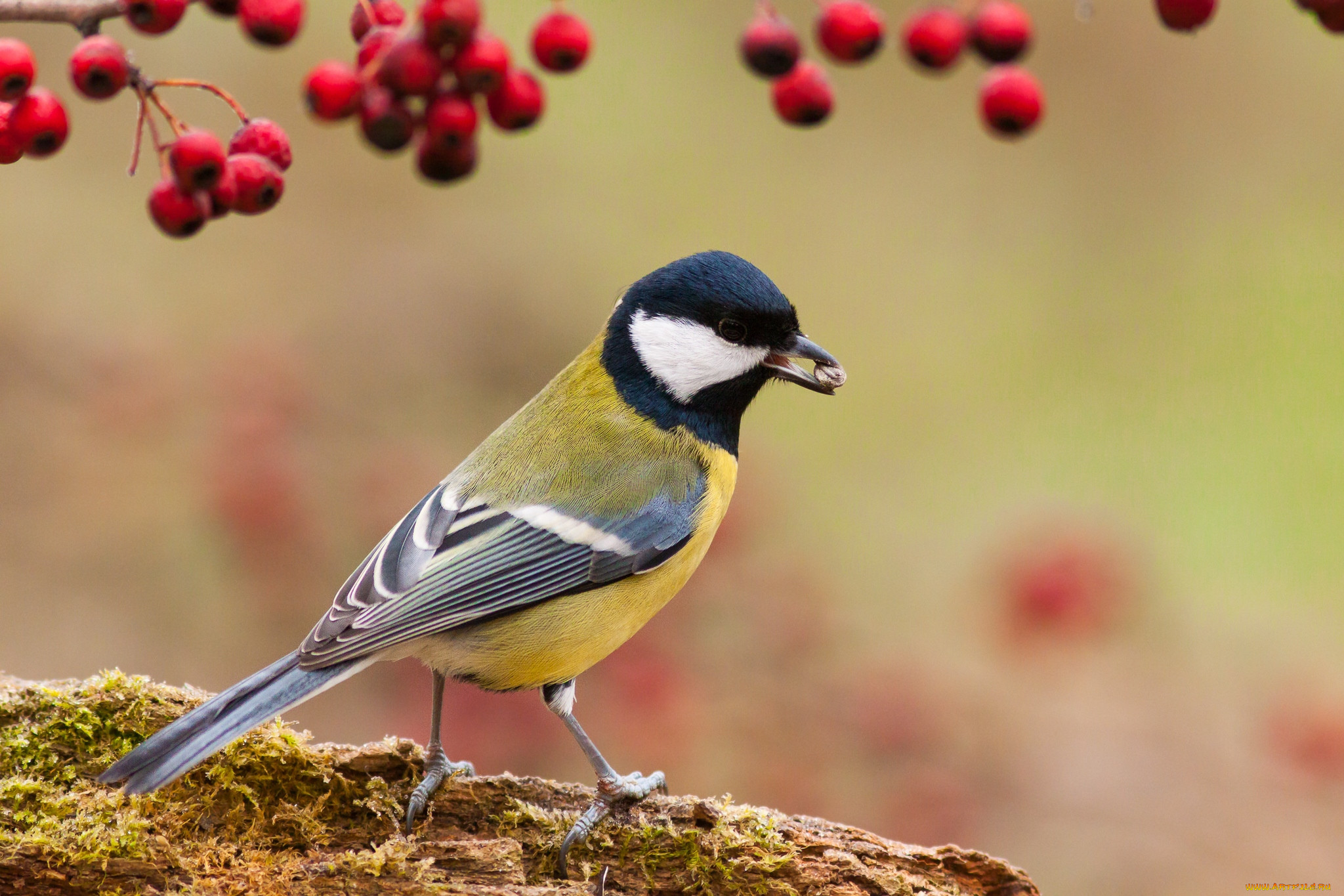 изображение птиц картинки доперестроечные времена сами